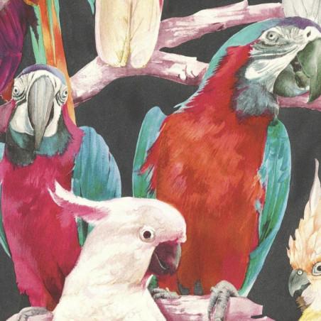 Papier peint Perroquet multicolore, fond noir - Lucy in the sky - Rasch