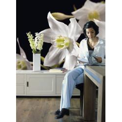 Panoramique MADONNA collection Floral - Komar