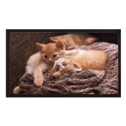 Paillasson / Tapis de propreté - IMAGE - Cats - Hamat