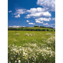 Panoramique MAEDOW collection Landscapes - Komar