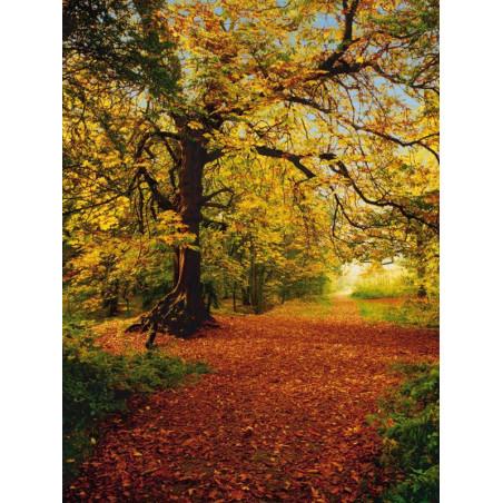 Panoramique AUTUMN FOREST collection Landscapes - Komar