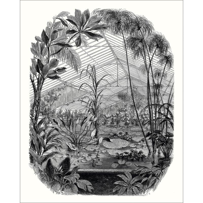 Panoramique Jardin D'hiver noir et blanc - BEAUTY FULL IMAGE 2 - Caselio - BFM102399000