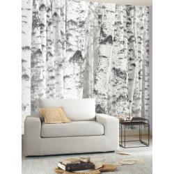 Panoramique intissé Bouleau - collection BLACK and WHITE - Caselio